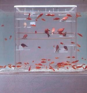 fishbirds-500x540